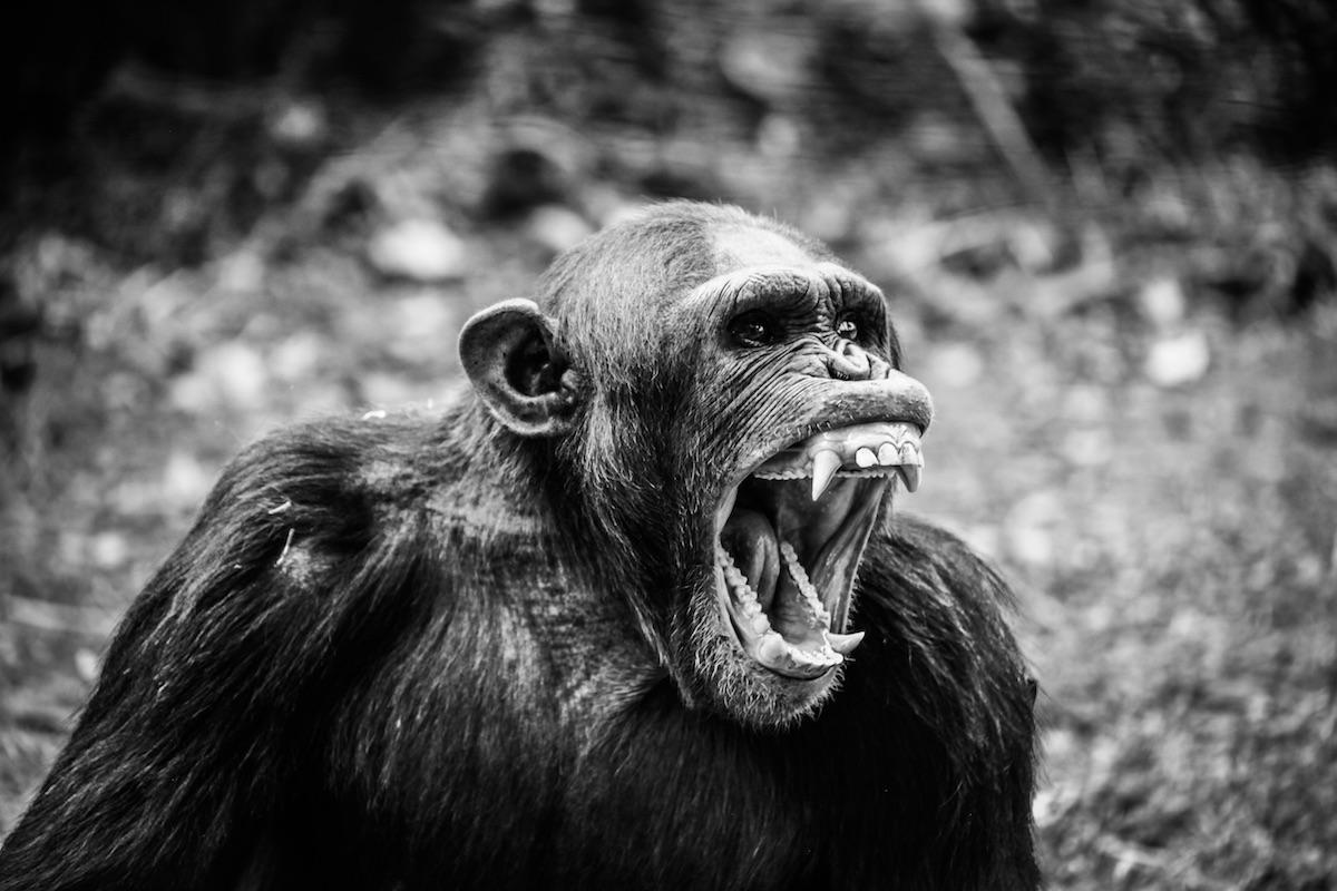 Reagindo a preconceito com preconceito: coisas que irritam