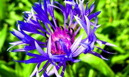 A flor estranha